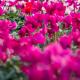 fioreria-michielin-copertina-prova-fiori
