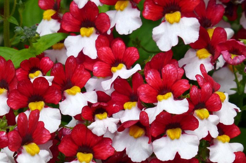 fioreria-michielin-fiori-autunno-inverno-sunsatia