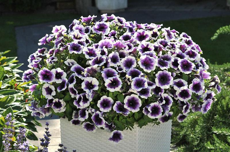 fioreria-michielin-fiori-primavera-estate-potunia