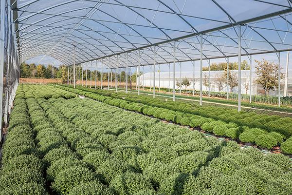 fioreria-michielin-floricoltura-4