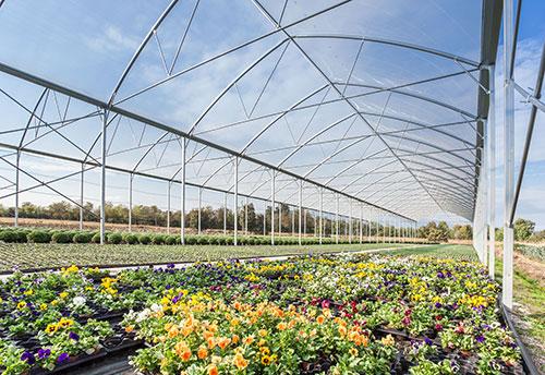 floricoltura-michielin-servizi-floricoltura-ampia-selezione-varieta-diverse