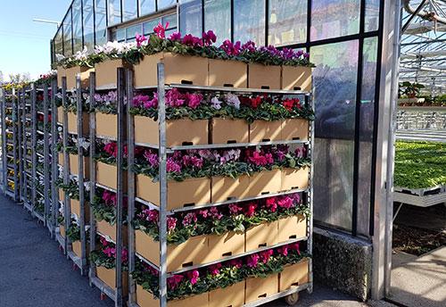 floricoltura-michielin-servizi-floricoltura-imballaggio-personalizzato