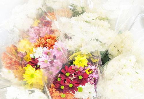 floricoltura-michielin-servizi-garden-composizioni