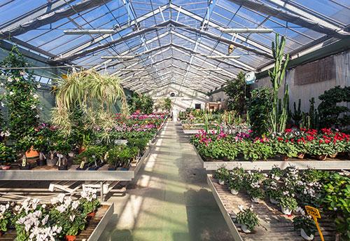 floricoltura-michielin-servizi-garden-tutto-per-il-giardinaggio