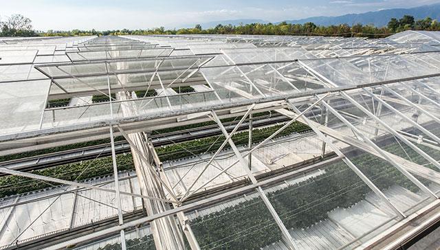 floricoltura-michielin-tecnologie-infrastrutture-per-la-coltivazione