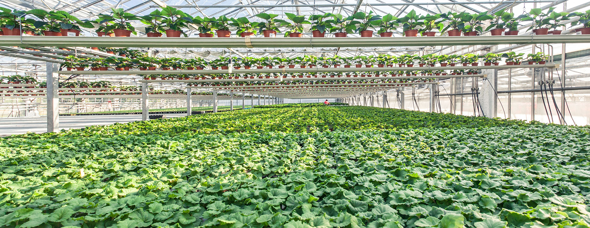 home-page-slider-floricoltura
